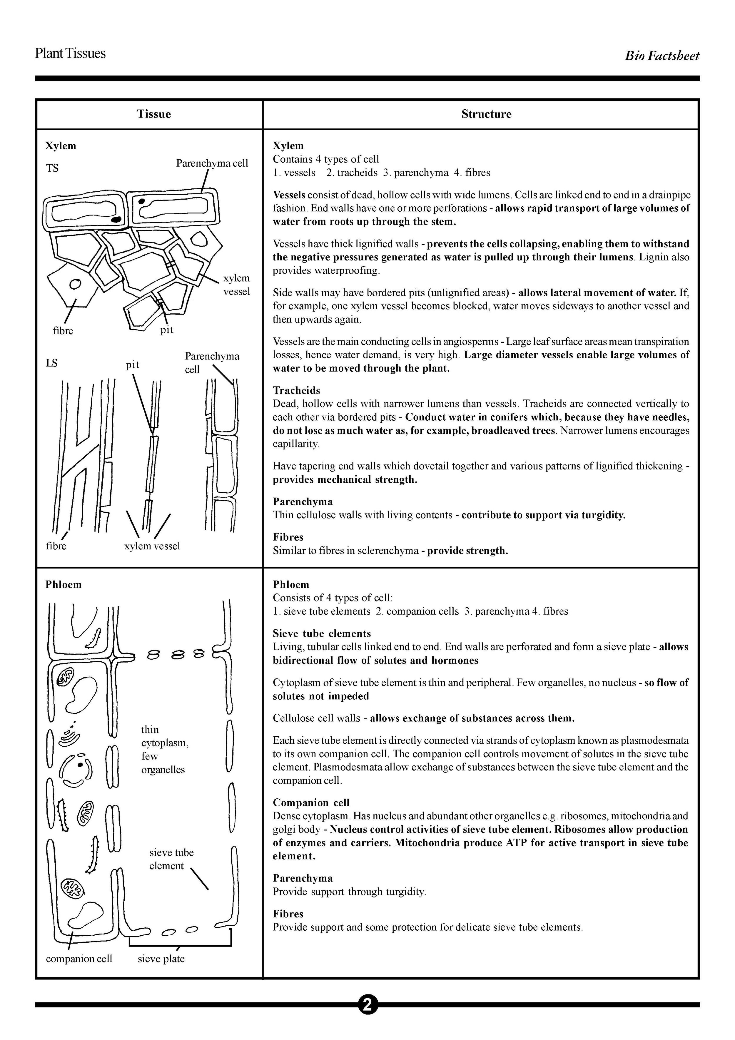 19_PLANT_TISSUES_Page_2.jpg