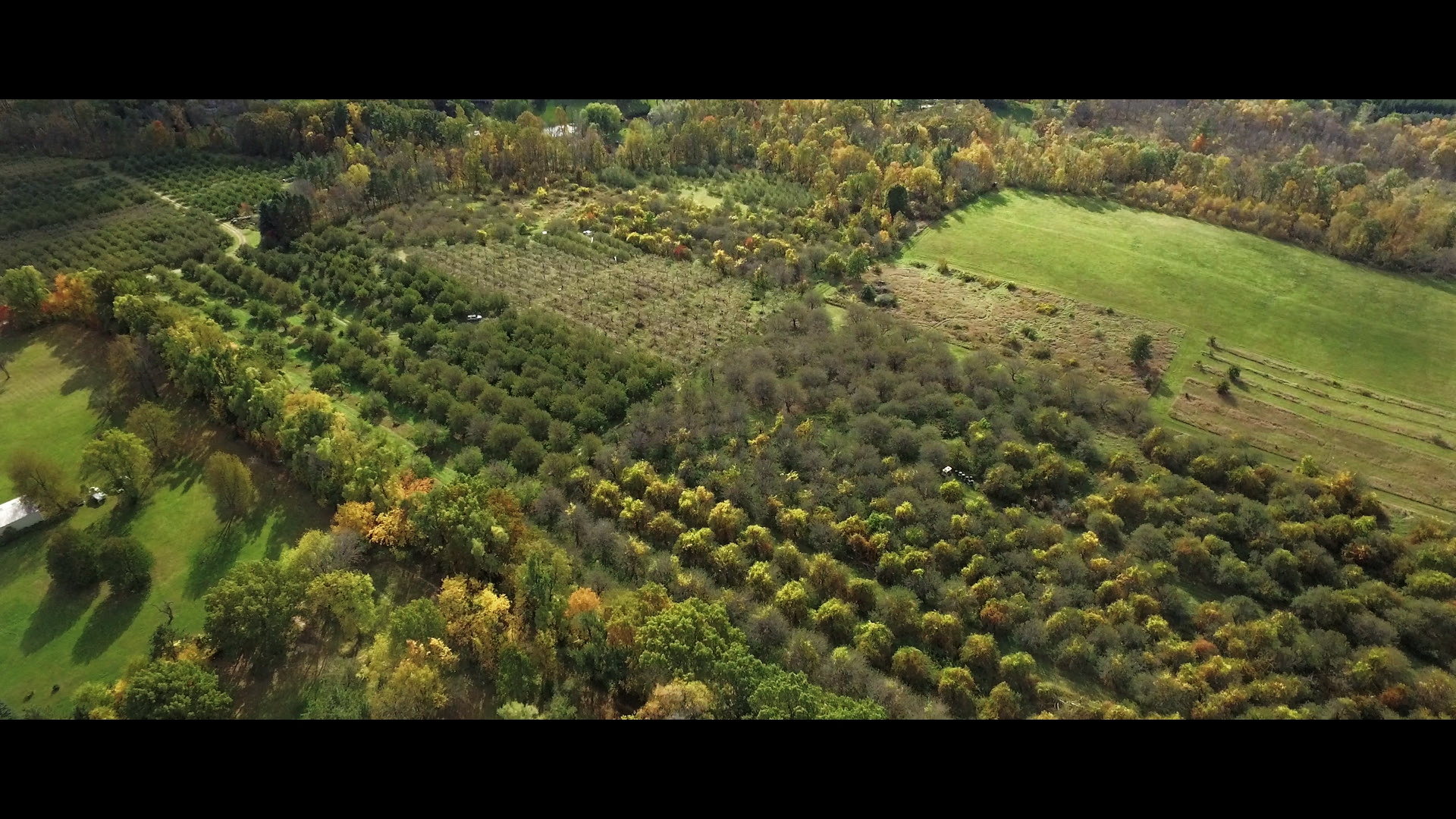Aerial Field in Detroit.jpg