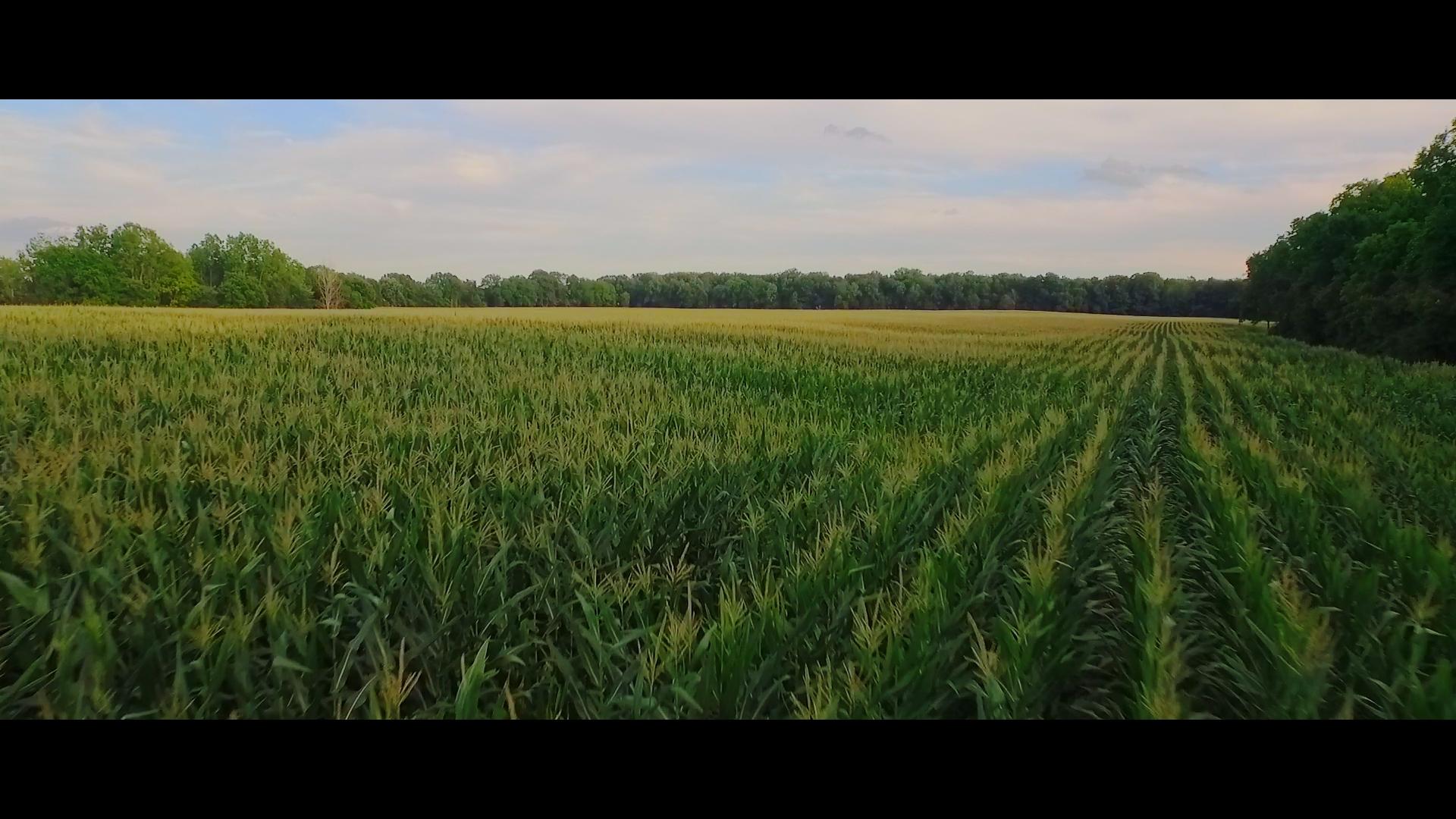 Crops in Field.jpg