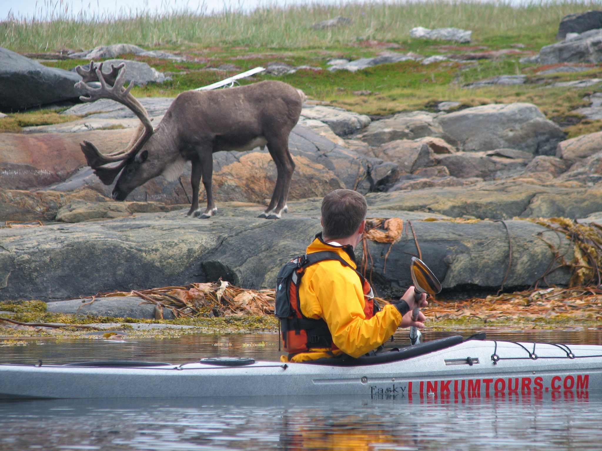 Kayak and caribou in Torngats