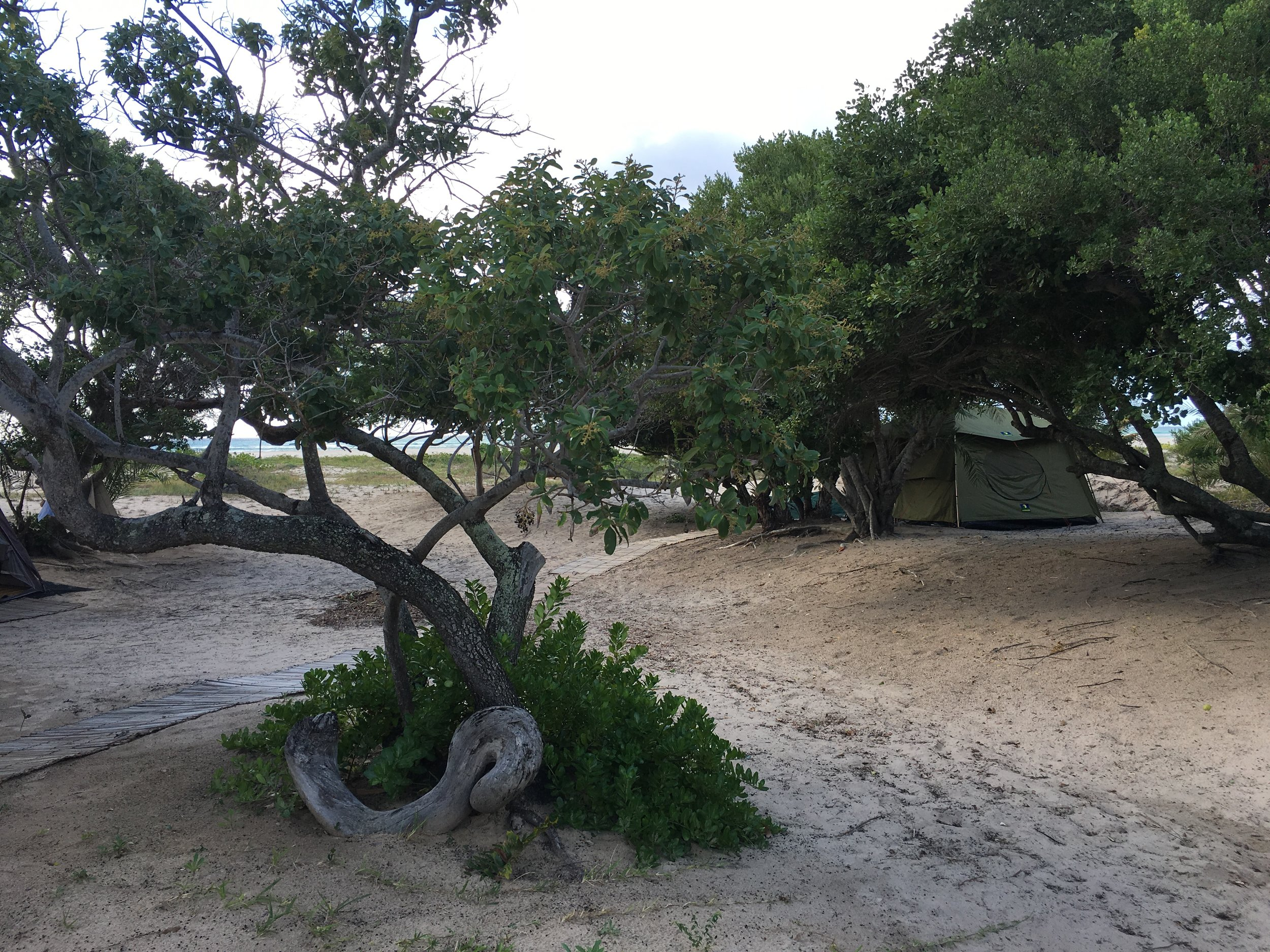 Mozam 22 - Room with a view - tent under trees.JPG
