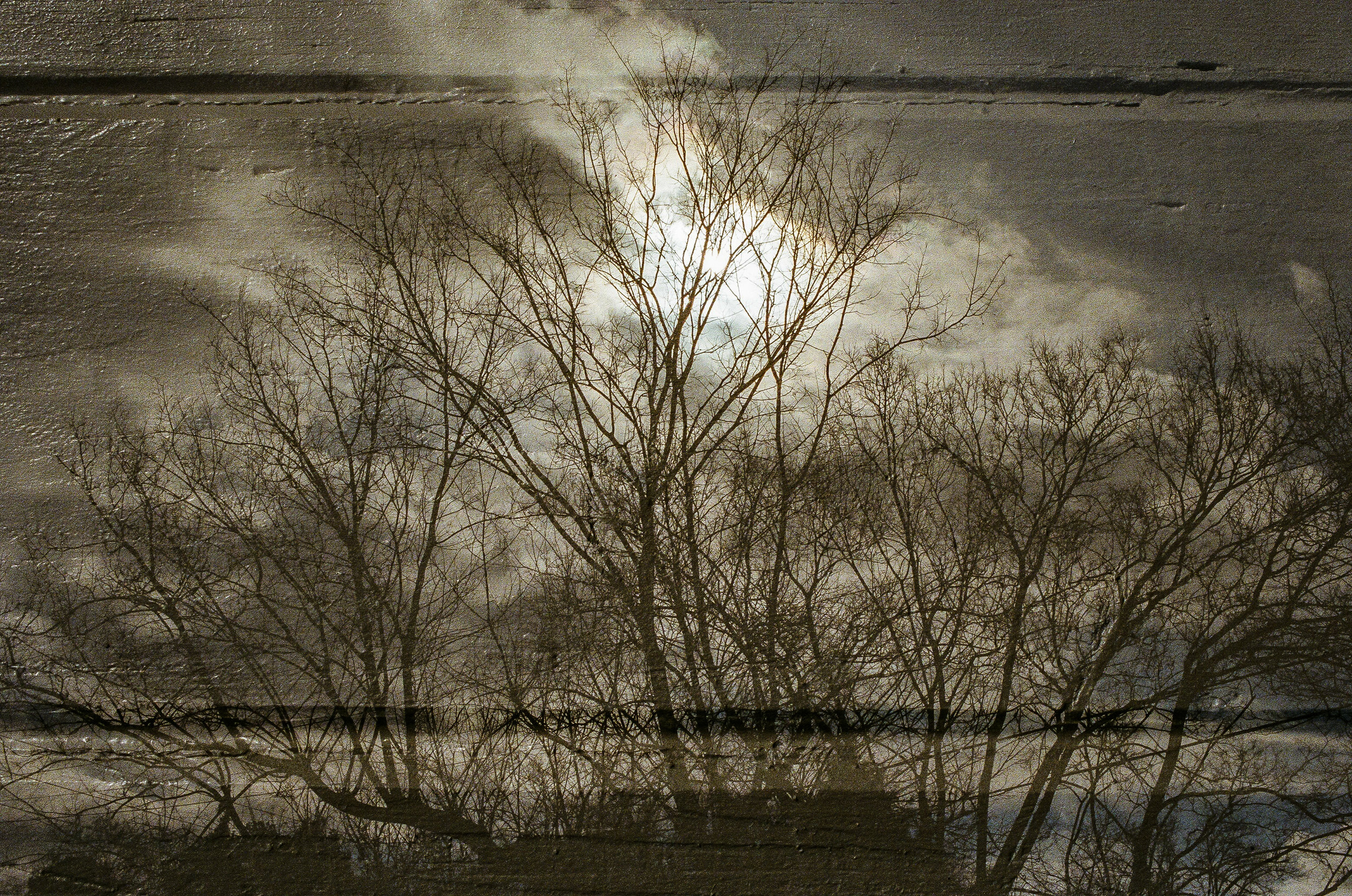 winter trees on top of wood panelling