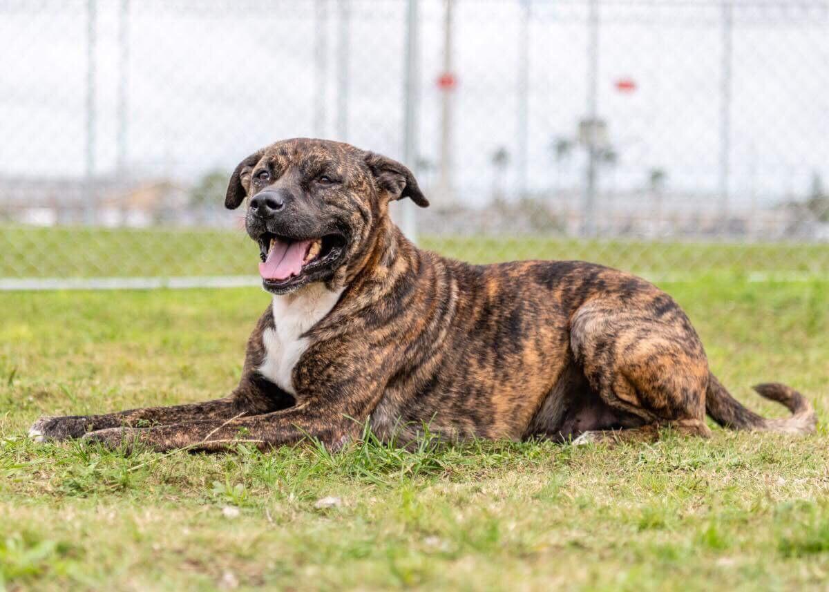 Key Melanie's dog.jpg