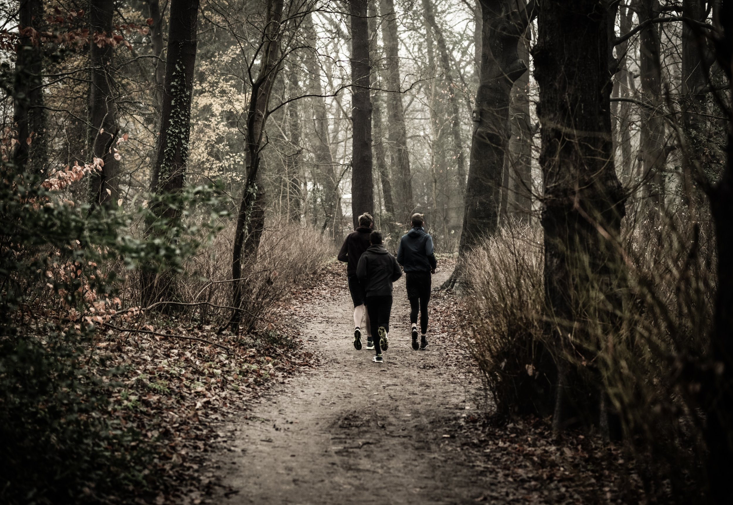Runners in woods on path.jpg