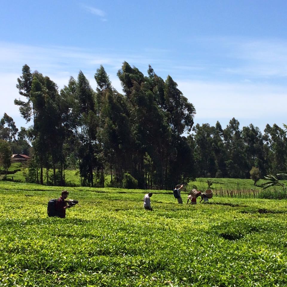 kenya_fields.jpg