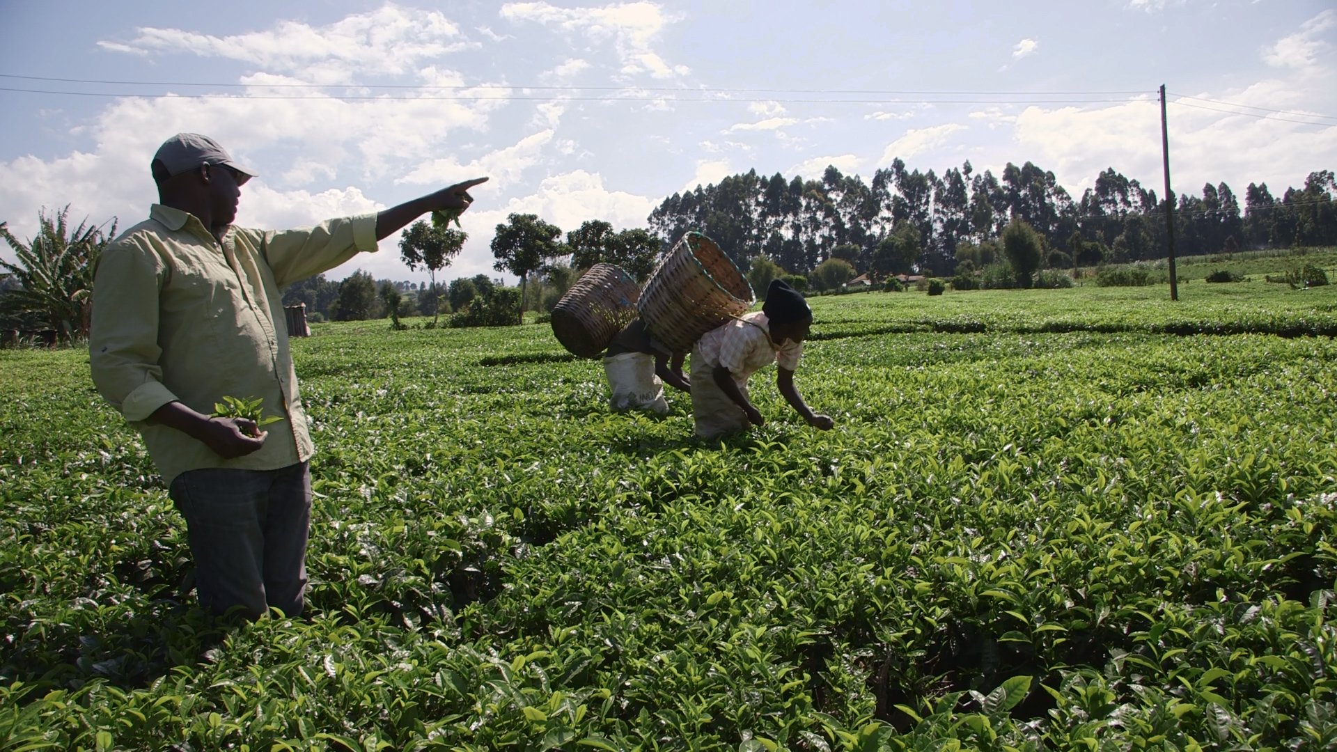 Kinoti with his sister and brother on his family tea farm in meru county, kenya.