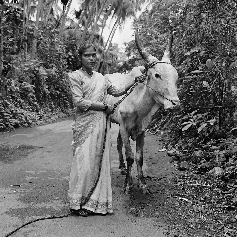 Woman with Bullock- Revanda, India