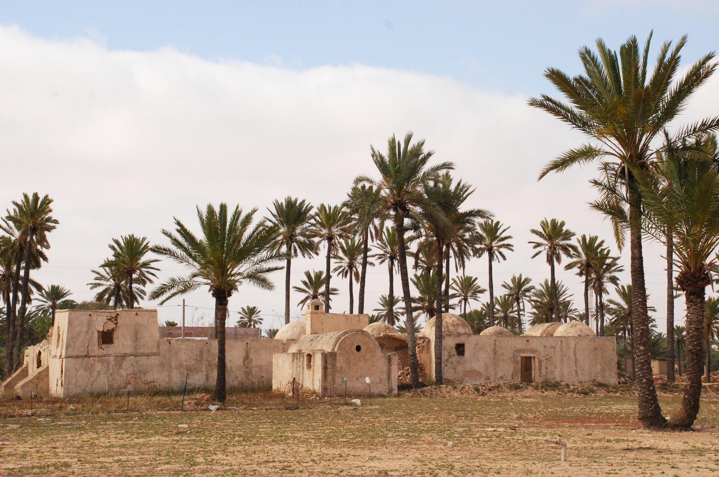 Farm- Djerba, Tunisia