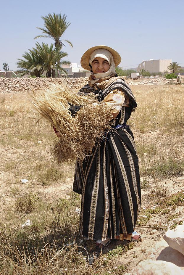 Berber Woman Collecting Wheat- Djerba, Tunisia