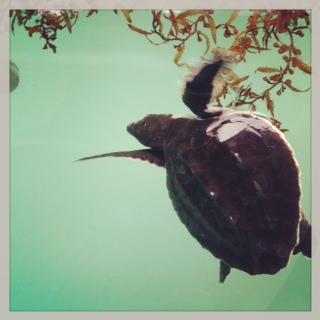 gabriellehopp_turtle.jpg