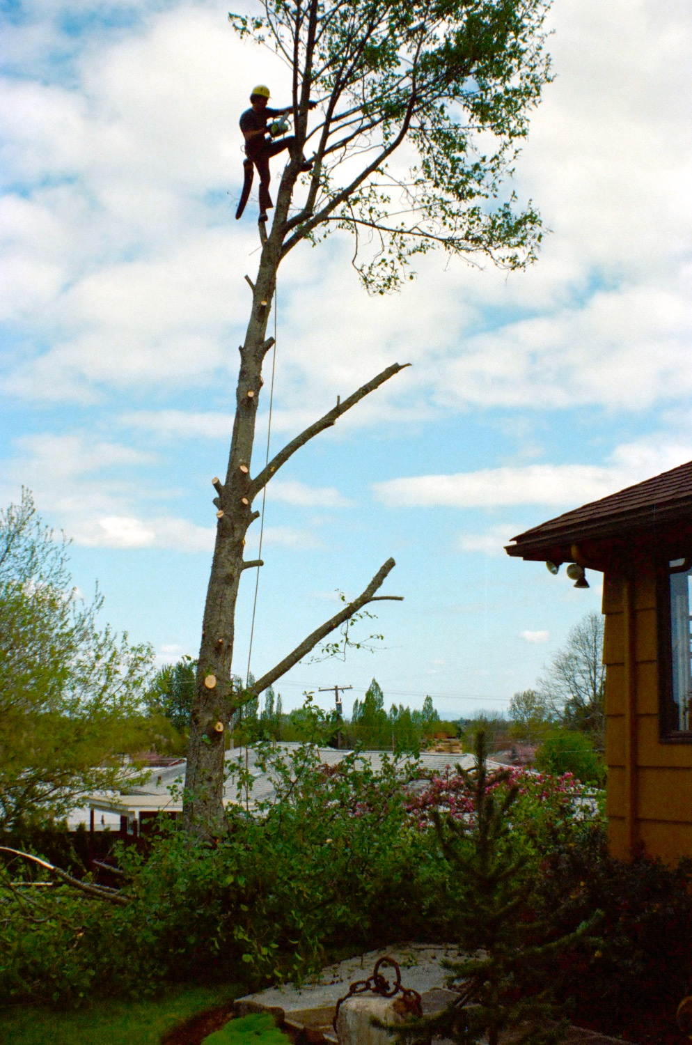 From this experience removing the alder, we embraced Rich Holmes as our arborist for the rest of his career.