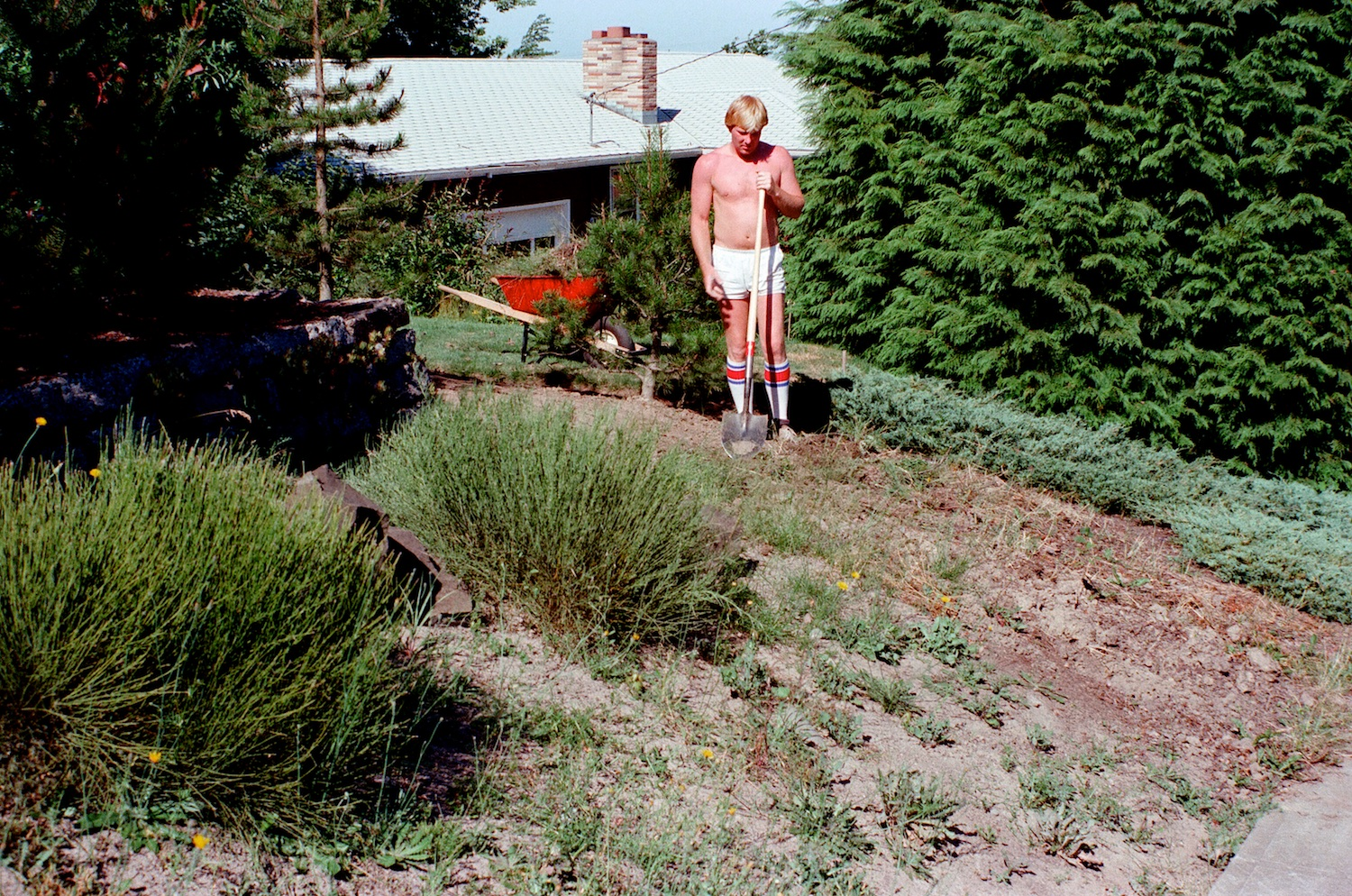 Renovation was the order of the day on the street side of the house as well. Bill here braves hot summer weather to remove juniper and Scotch broom(!).