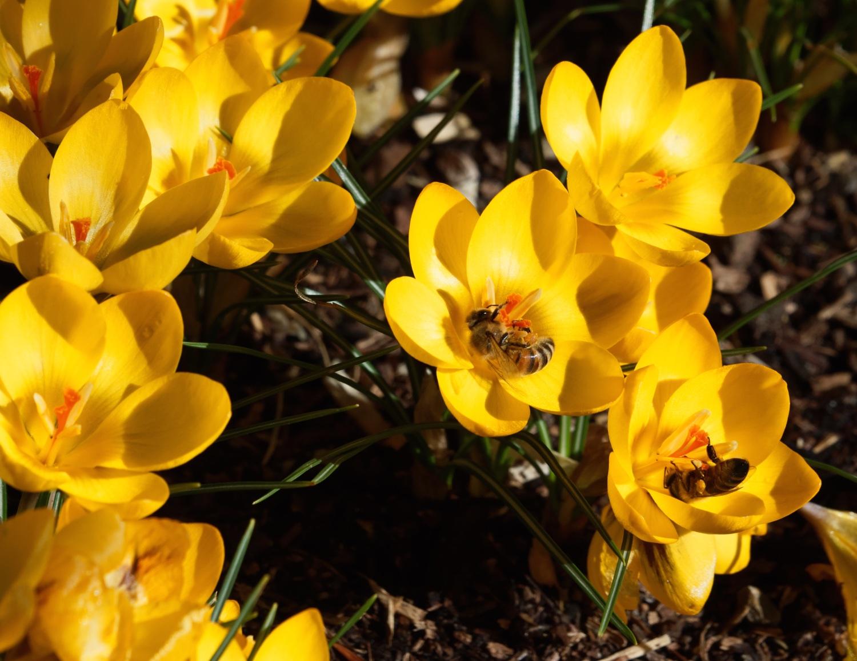 Marking spring...