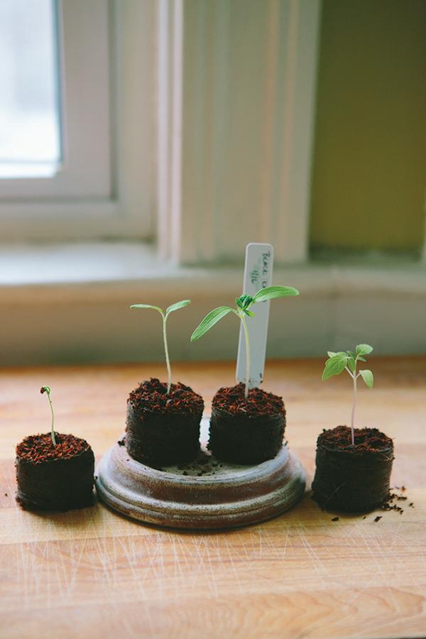 seedstarting_6.jpg