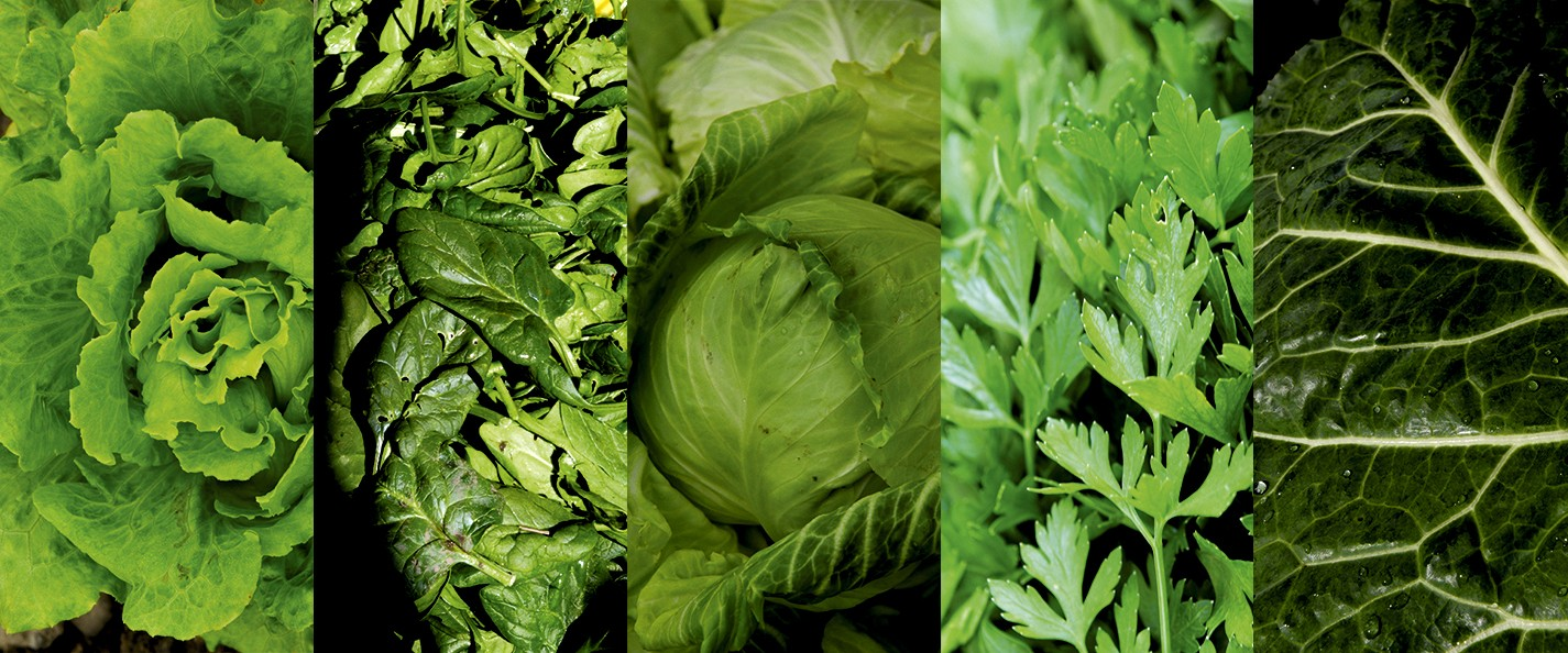 greens for gumbo