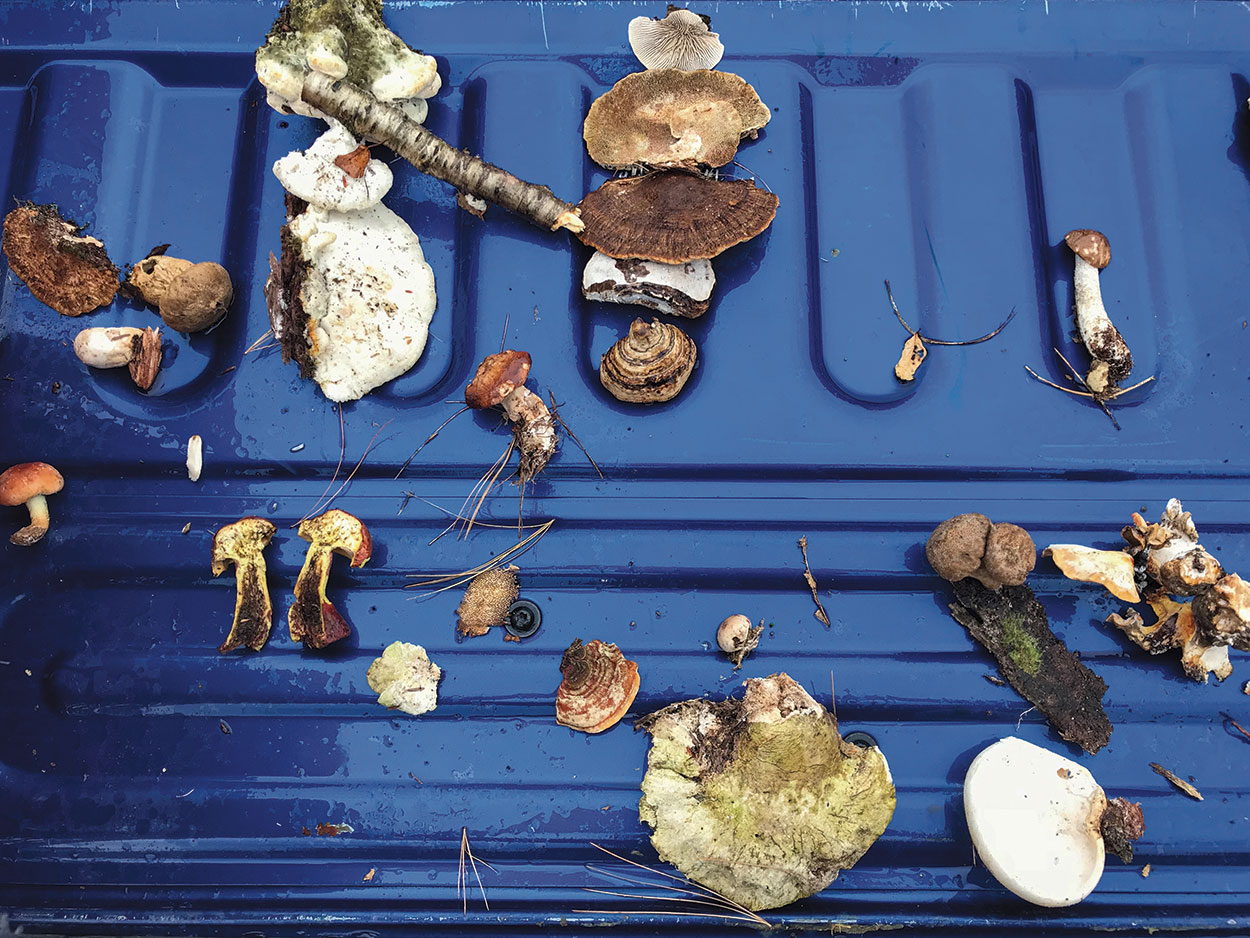 4-Mushrooms-Foraging-10-DL10062017.jpg