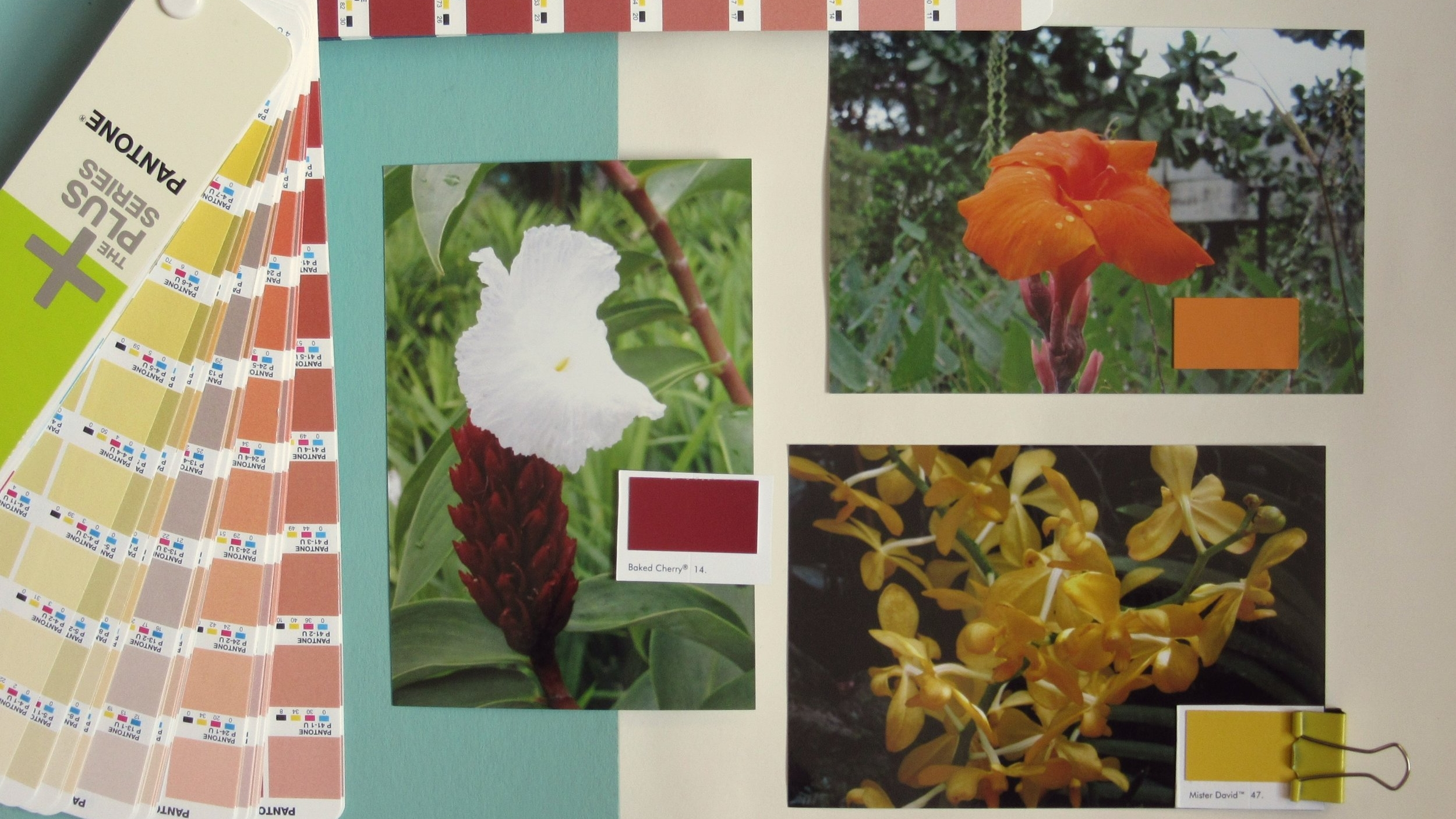 ... & tropical brights - Paint colours: (clockwise from far left) Little Greene Baked Cherry; Marigold; Mister David.
