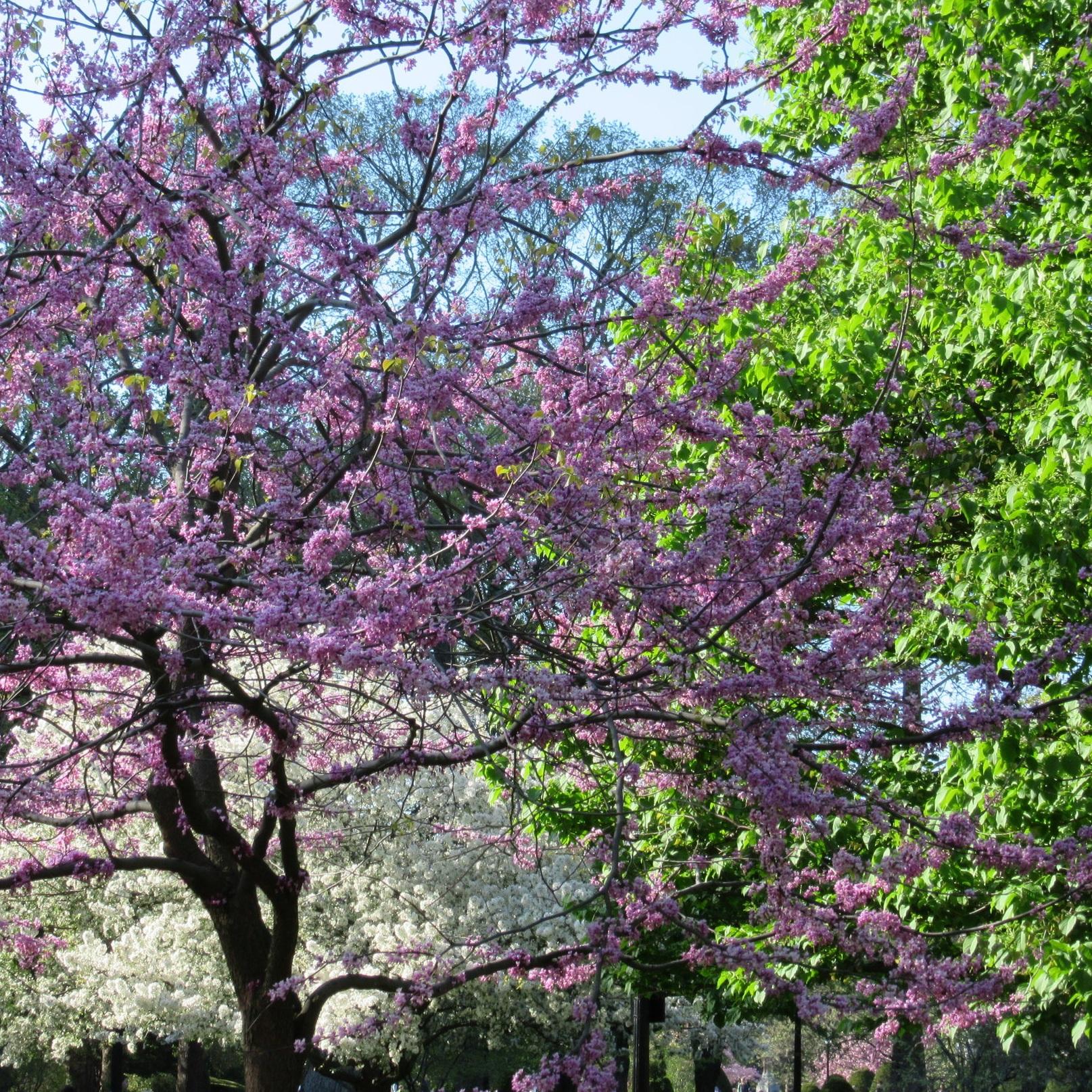 1_Public+Garden_IMG_8563.jpg