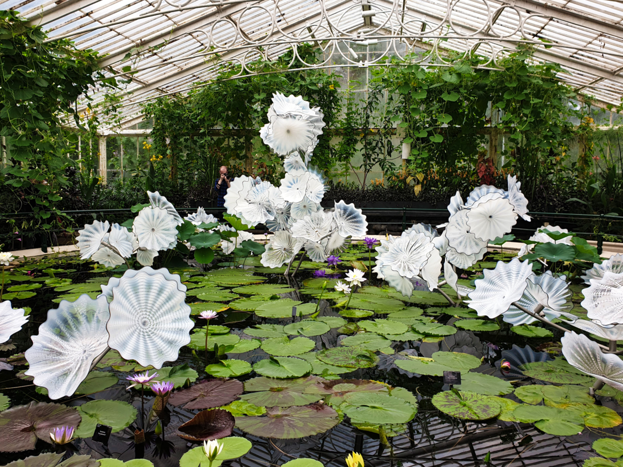 Dale Chihuly, Ethereal White Persian Pond