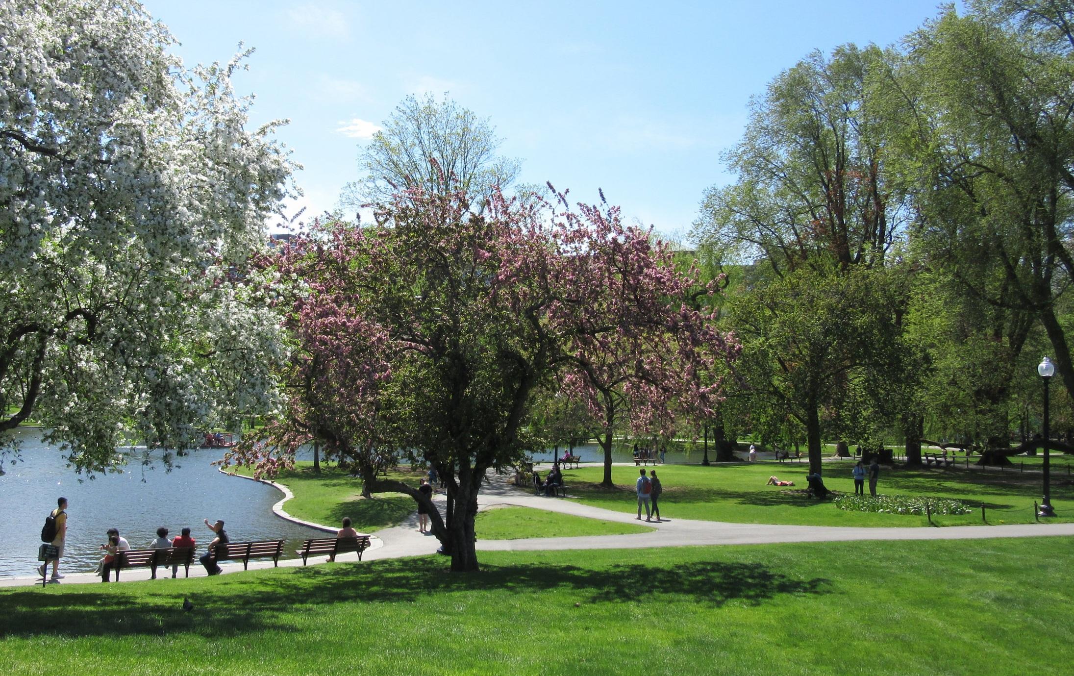 2019-South_Island_Art-Boston-public-garden-spring