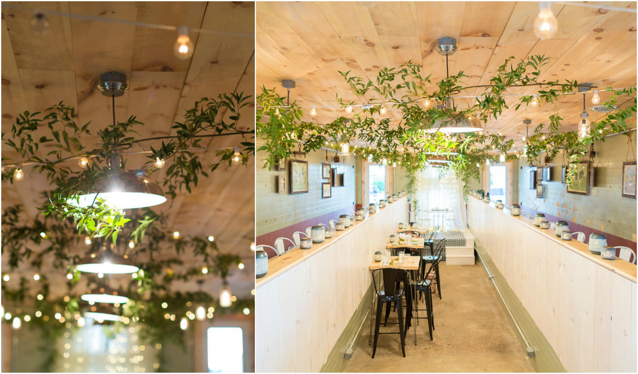 ceiling vines from Farm to Table Dinner