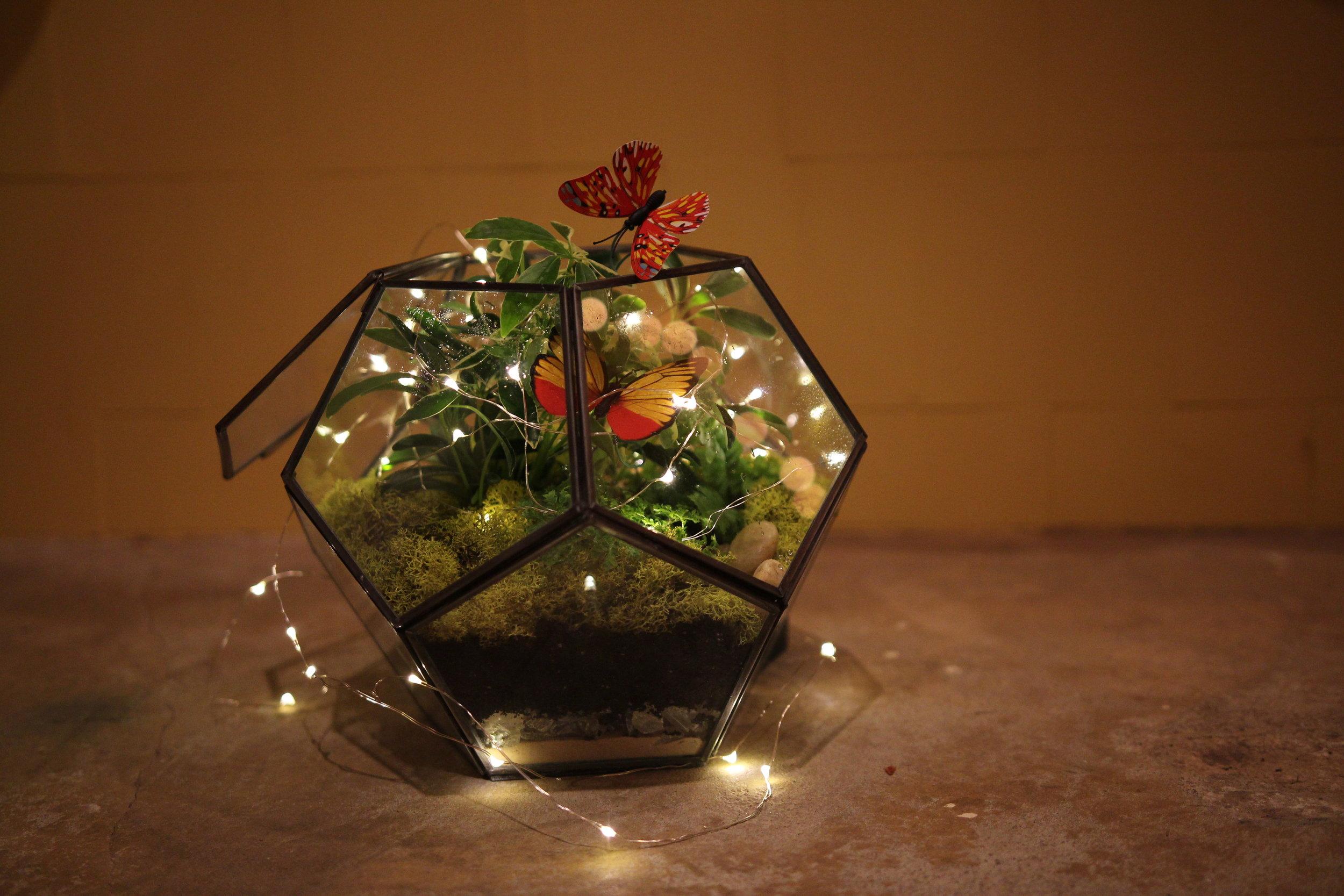 terrarium - DIY - indoor plants