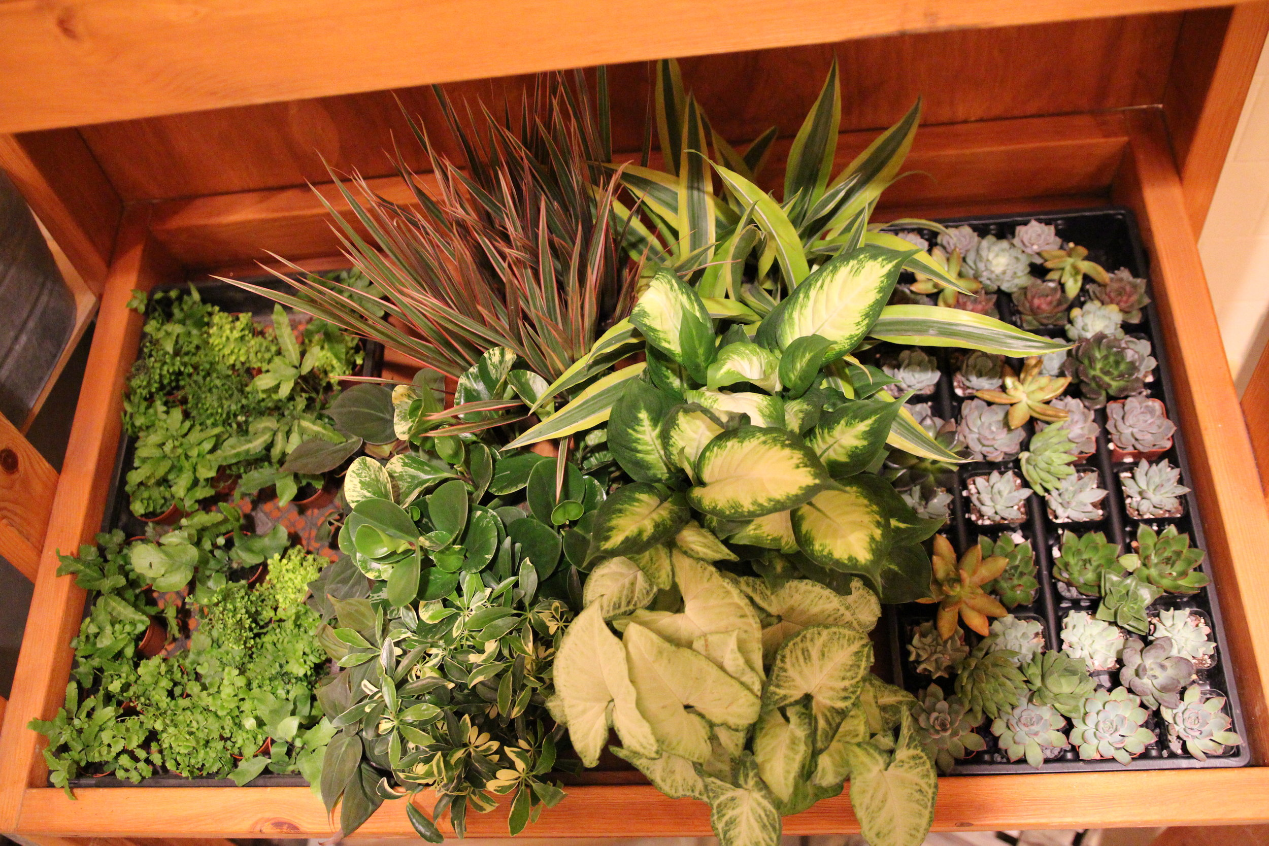 variety of plants from  A Milkhouse Party's terrarium workshop