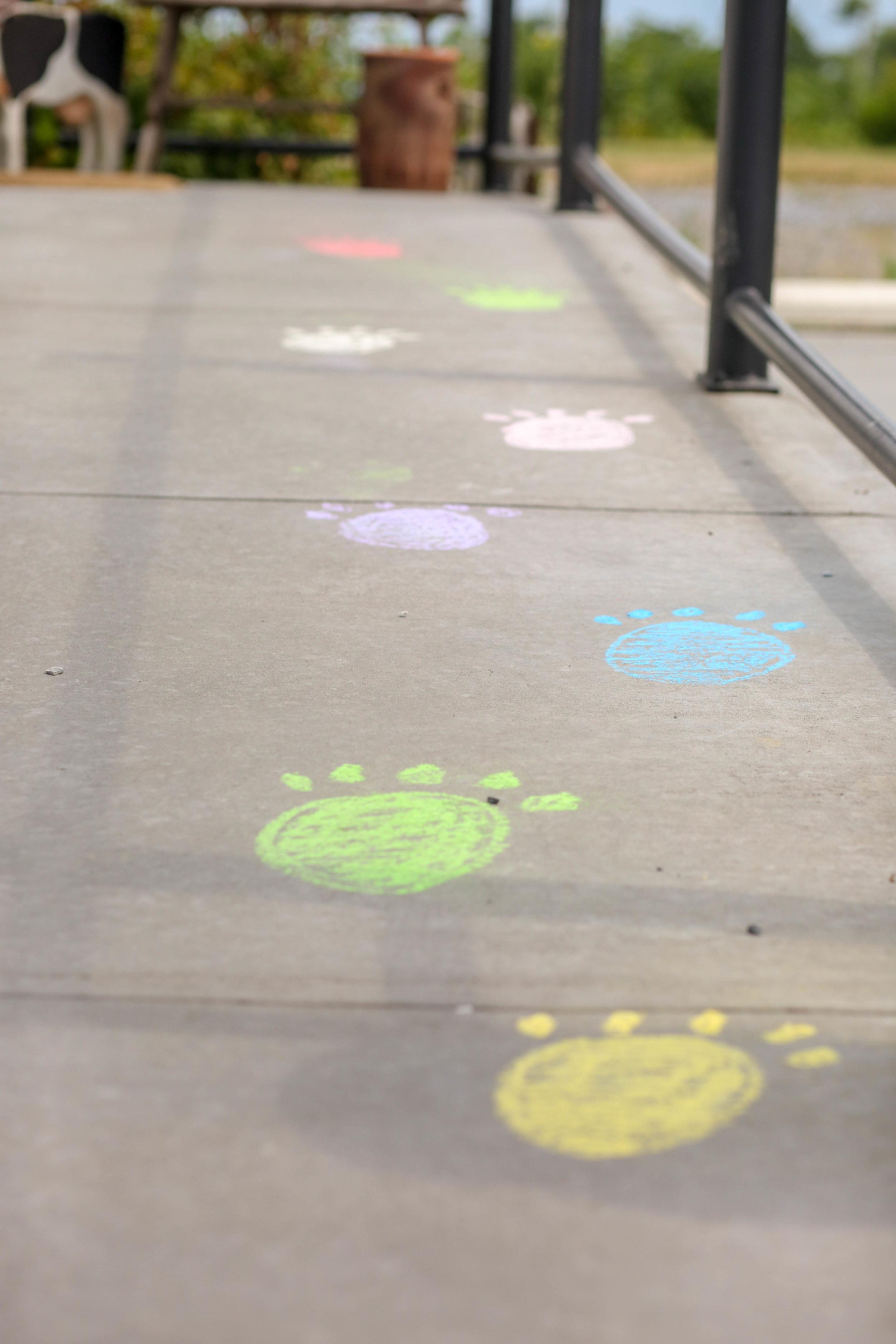 paw prints lead the way