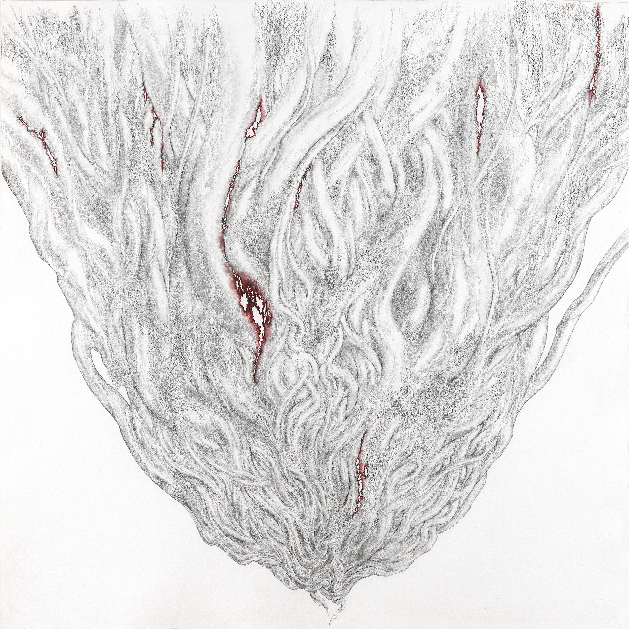 BLEEDING BANYAN 2 , 2013, graphite pencil and red marker with acrylic on Twinrocker handmade paper, 34 x 34 inches