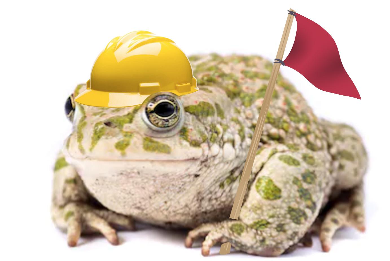 frog constuctiob.jpg