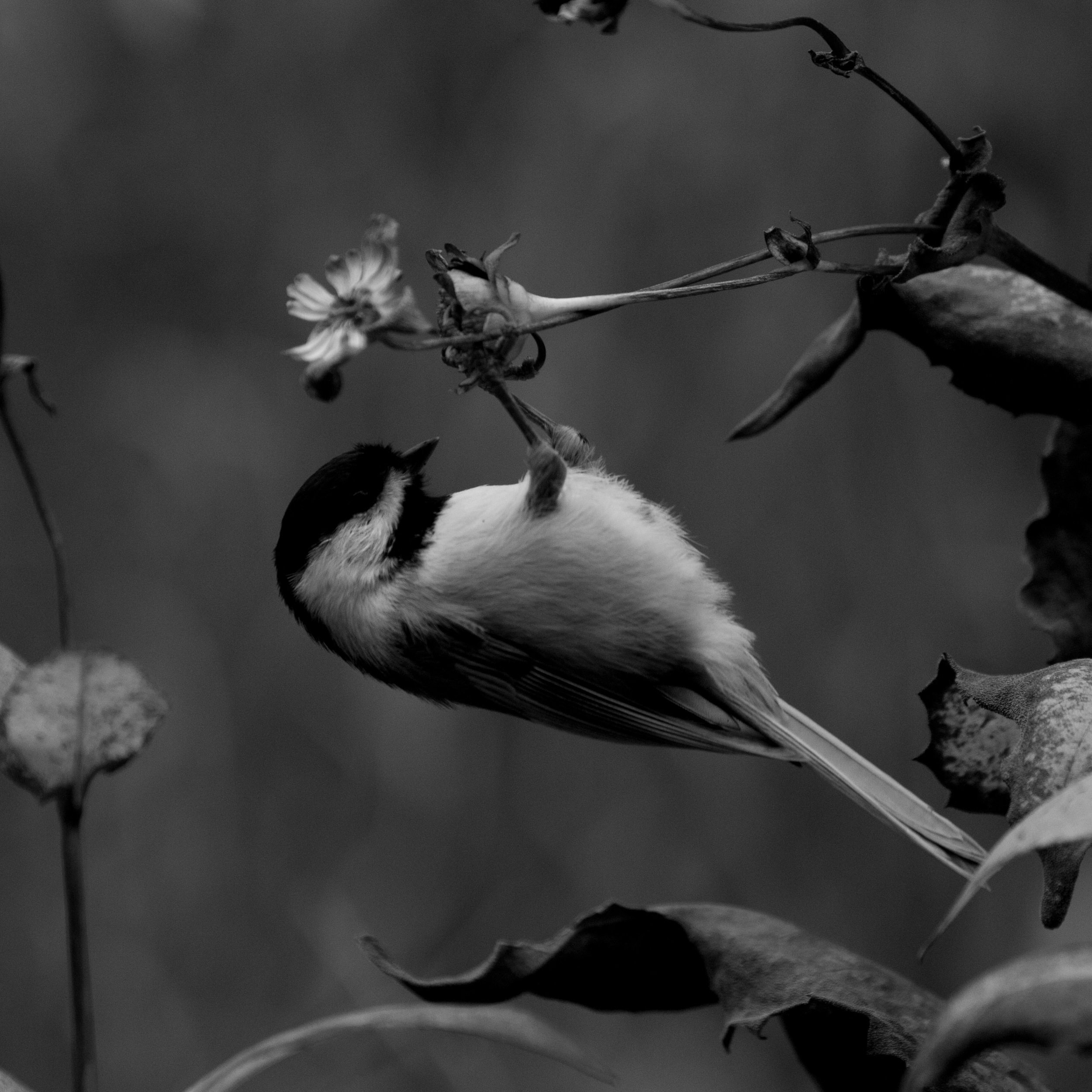 birdbw_mini (1).jpg