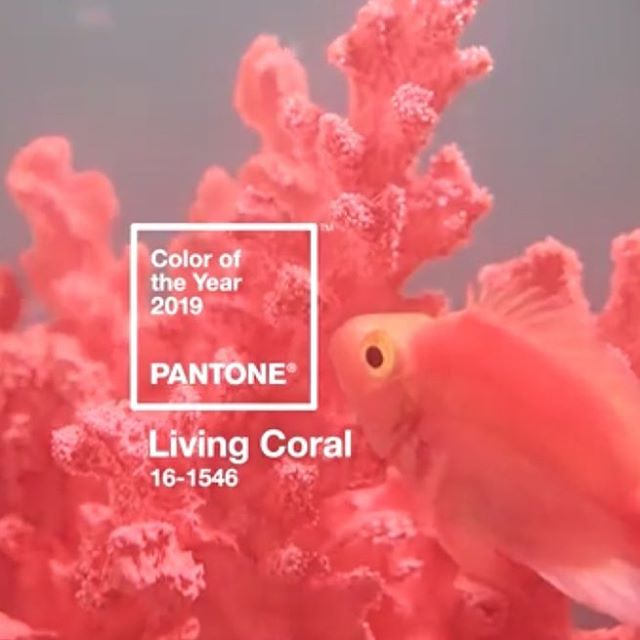 """The Pantone 2019 color of the year is Living Coral. """"With consumers craving human interaction and social connection, the humanizing and heartening qualities displayed by the convivial PANTONE Living Coral hit a responsive cord."""" Leatrice Eiseman https://www.pantone.com/color-intelligence/color-of-the-year/color-of-the-year-2019 #pantone2019 #coloroftheyear #livingcoral #humaninteraction #socialconnection #graphicdesign"""