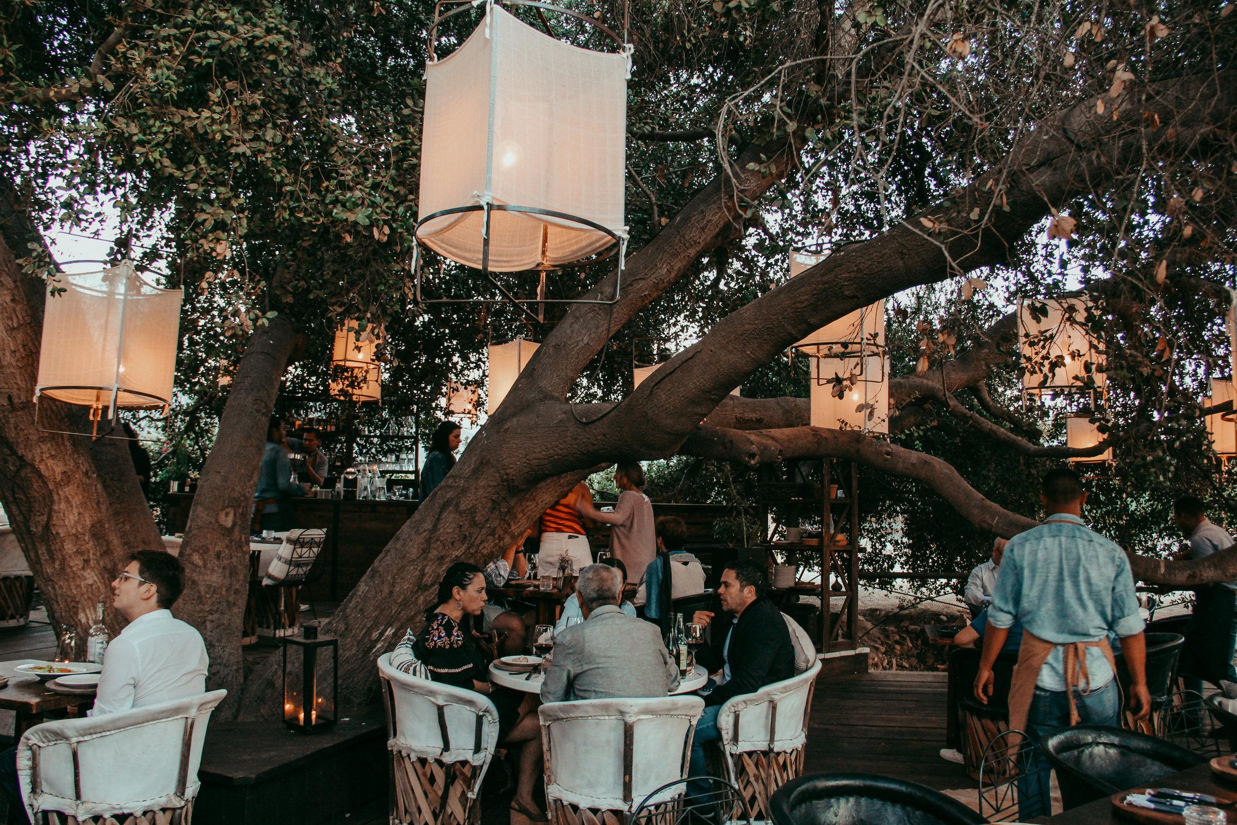 ANIMALÓN - Restaurante bajo el encino