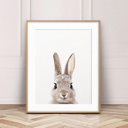Bunny Photo.jpg