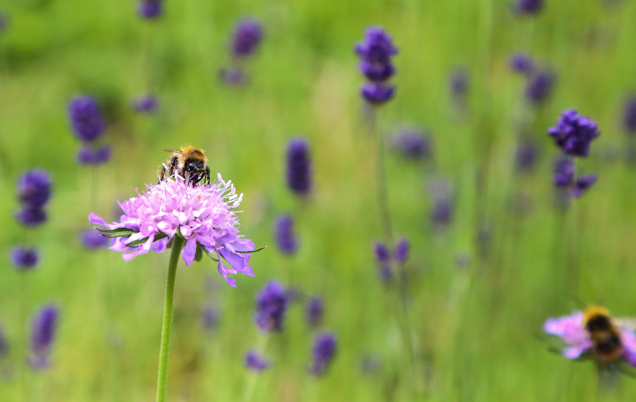 Nature-flower-bee-2.jpg