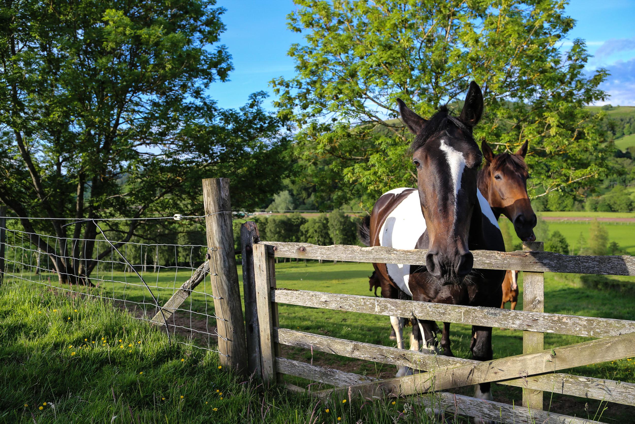 Nature-pirn-horses-close-8.jpg