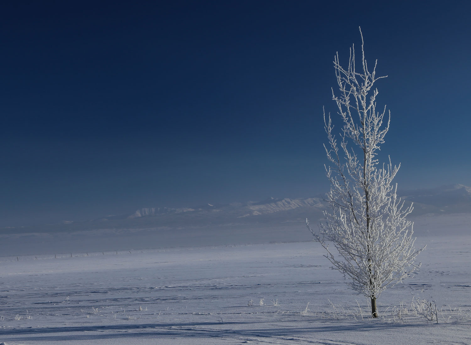 tree-idaho-alone.jpg