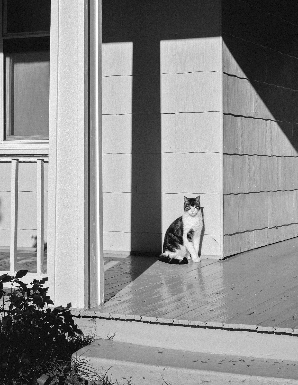 Cat_SunshinePorch_0005_crop.jpg