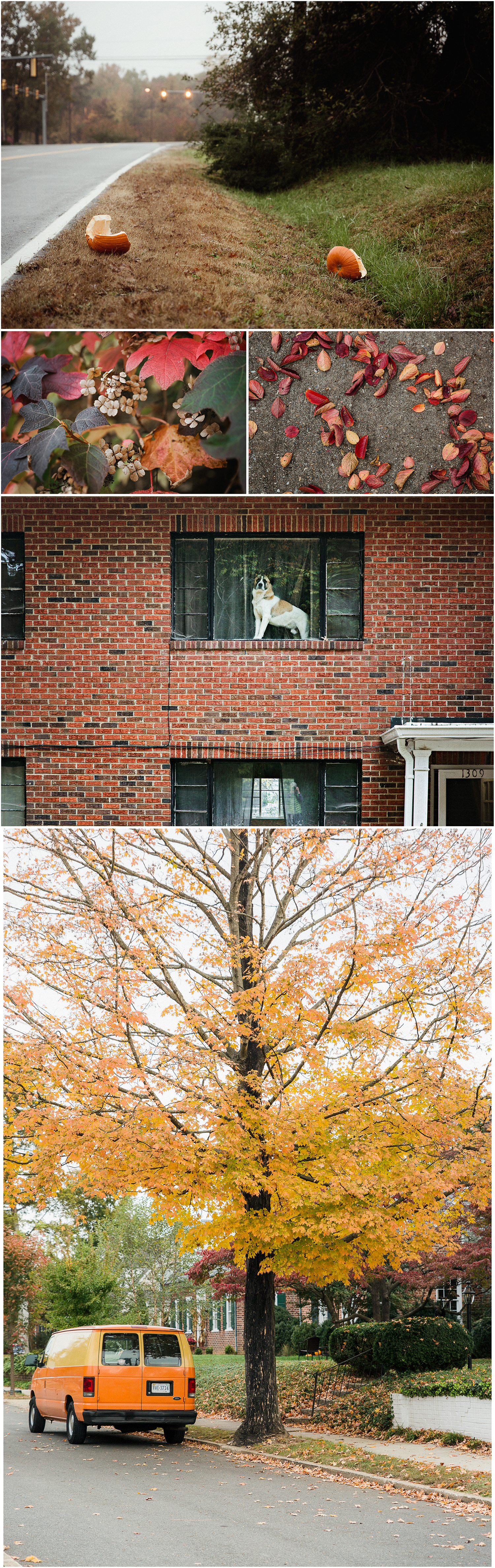 Downtown_walkabout_fall_Collage.jpg