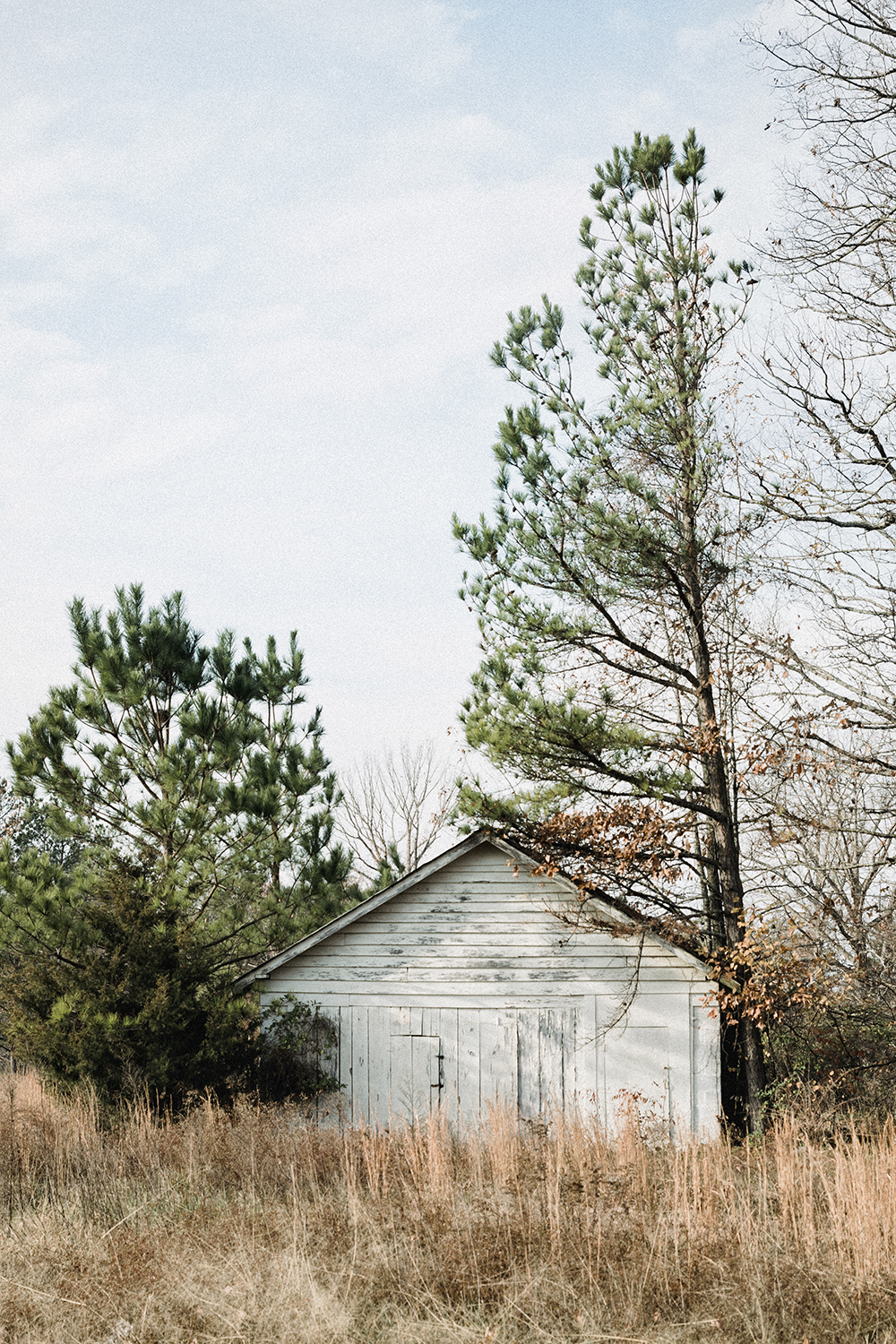 Shed_surrounded_trees_0003.jpg