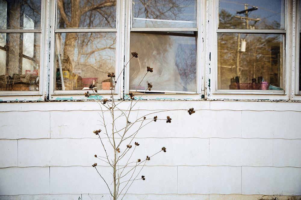 Hopkins_AbandonedHouse_Window_Tree.jpg