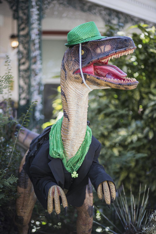 Alan, the raptor | Fan District | Richmond, Virginia | March 2018