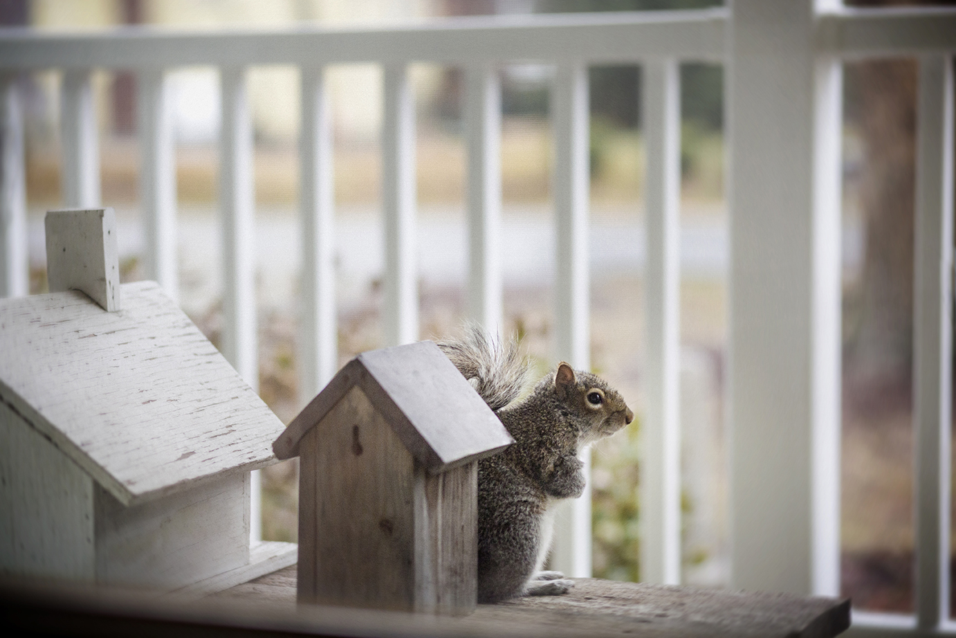 squirrel_on_front_porch_0007.jpg