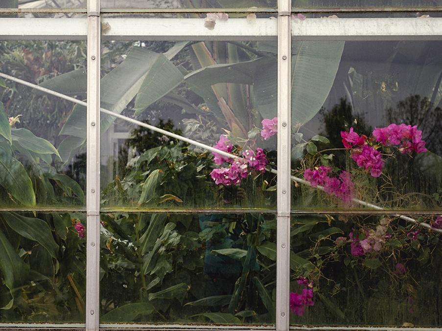 Lewis Ginter Botanical Garden | Richmond, Virginia