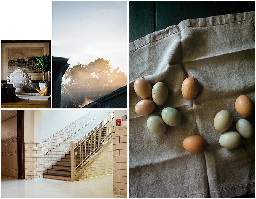 Eggs_Collage.jpg