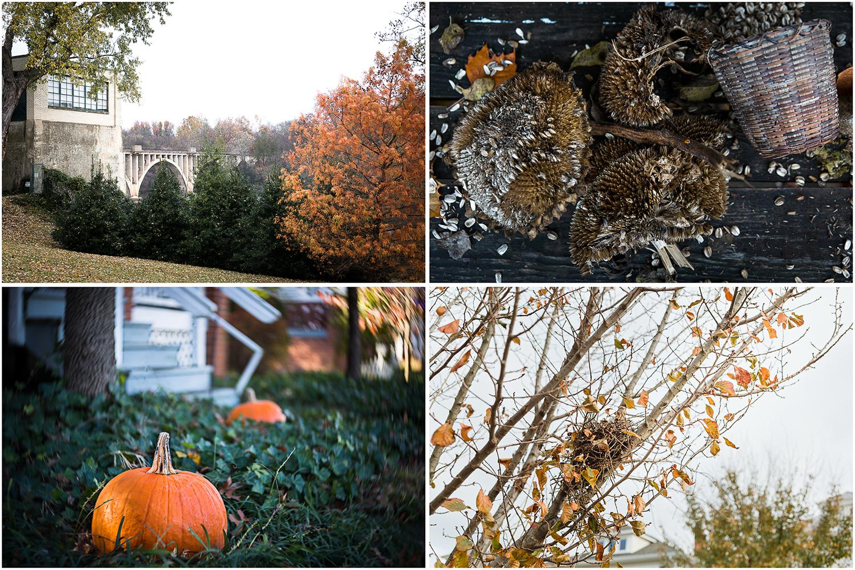 Thanksgiving_Collage_04.jpg