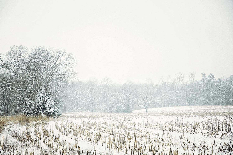 snowy corn field
