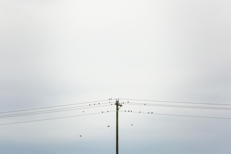 Birds_on_a_wire_0002.jpg