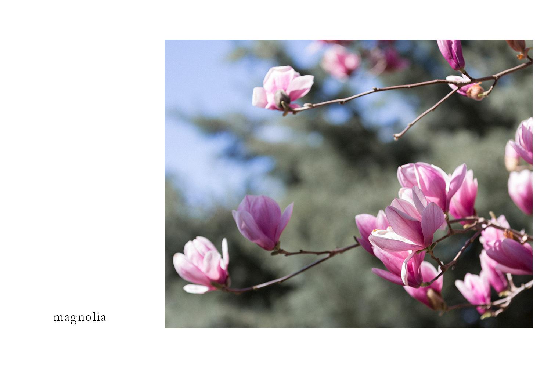 Magnolia_book_page.jpg
