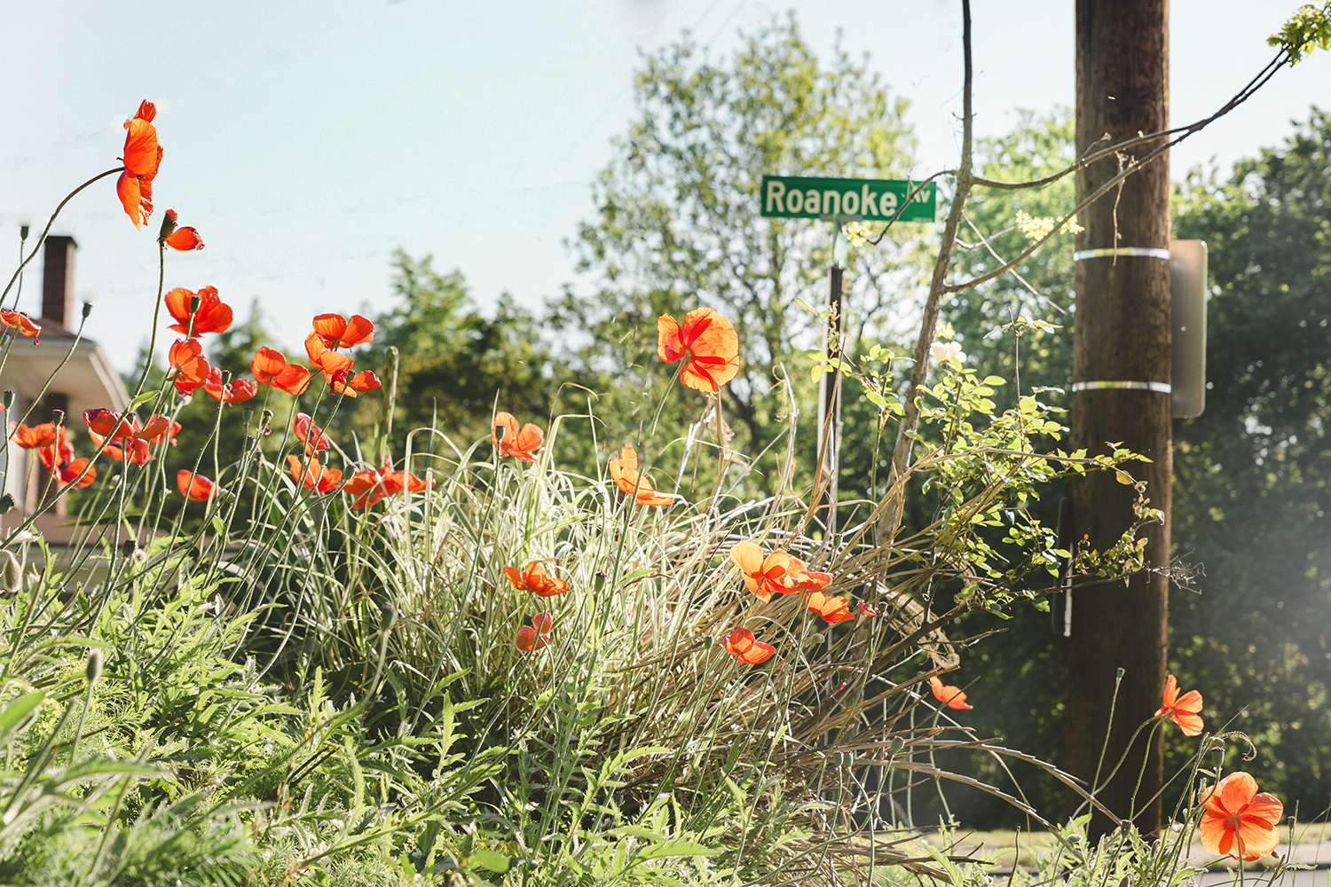 Poppies_Roanoke_0040.jpg